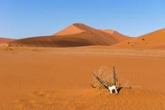 De schedel van de Oryx gemsbok antilope in Sossusvlei-duinen Royalty-vrije Stock Afbeeldingen