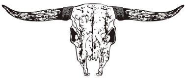 De Schedel van de stier Stock Foto