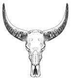 De schedel van de stier met hoornen Stock Foto