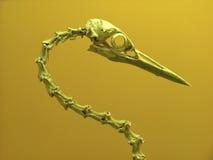De schedel van de vogel Royalty-vrije Stock Foto's