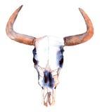 De schedel van de waterverfstier Royalty-vrije Stock Foto's