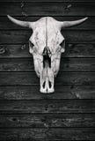De schedel van een stier Houten textuur Stock Afbeelding