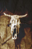 De schedel van Grungestieren Royalty-vrije Stock Afbeeldingen