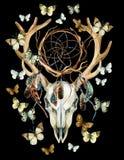 De Schedel van herten Dierlijke schedel met dreamcather en vlinder Stock Afbeeldingen