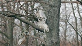 De schedels hangen in de bomen stock videobeelden