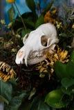 De schedelvos in een boeket van bloemen verwelkte zonnebloemboeket Stock Foto's
