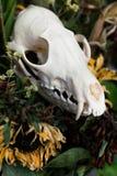 De schedelvos in een boeket van bloemen verwelkte zonnebloemboeket Royalty-vrije Stock Foto