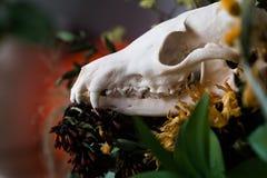 De schedelvos in een boeket van bloemen verwelkte zonnebloemboeket Royalty-vrije Stock Afbeeldingen