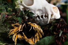De schedelvos in een boeket van bloemen verwelkte zonnebloemboeket Royalty-vrije Stock Foto's