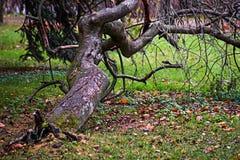 De scheefgetrokken boom wordt gedrukt tegen de grond royalty-vrije stock fotografie