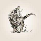 De schets isoleerde getrokken door een klein leuk katje Royalty-vrije Stock Afbeeldingen