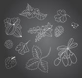 De schets van bessen op een bord Stock Illustratie
