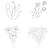 De schets van bloemenboeketten Royalty-vrije Stock Afbeelding