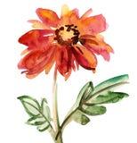 De schets van de bloem Stock Foto