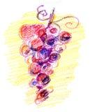 De schets van de druif Stock Fotografie