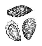 De schets van de oestersinkt stock illustratie