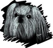 De schets van de portrethond SHIH TZU Stock Afbeelding