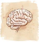 De schets van hersenen Stock Foto's