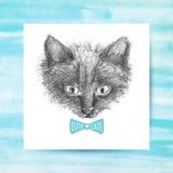 De schets van het kattengezicht Stock Afbeeldingen