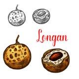 De schets van het Longanfruit van Aziatische exotische tropische bes royalty-vrije illustratie