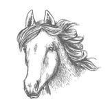 De schets van het paardhoofd van Arabische merrie royalty-vrije illustratie
