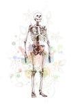 De schets van het skelet & bloemenkalligrafieornament Stock Fotografie