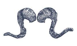 De schets van hoornschapen Stock Foto's
