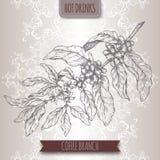 De schets van de koffietak met bonen en bloemen Hete drankeninzameling Stock Fotografie