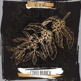 De schets van de koffietak met bonen en bloemen op zwarte achtergrond Hete drankeninzameling Royalty-vrije Stock Fotografie