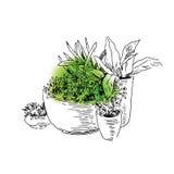 De schets van tuinelementen Stock Foto's