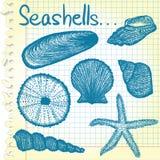 De schetsen van de zeeschelp Stock Foto's