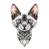 De schetsvector van het kattengezicht vector illustratie