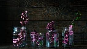 De schilderachtige purpere lente bloeit in de flessen die van glasvazen zich op een rij op een donkere houten achtergrond met rui Royalty-vrije Stock Foto's