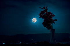 De schilderachtige purpere lente bloeit in glasvaas die zich op een rij op een donkere achtergrond met sterren en maan bevinden Stock Foto's