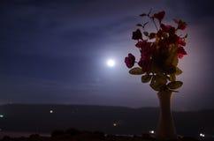De schilderachtige purpere lente bloeit in glasvaas die zich op een rij op een donkere achtergrond met sterren en maan bevinden Stock Afbeelding