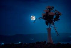 De schilderachtige purpere lente bloeit in glasvaas die zich op een rij op een donkere achtergrond met sterren en maan bevinden Royalty-vrije Stock Foto's