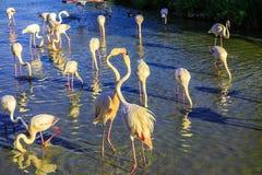 De schilderachtige vogels communiceren met elkaar Royalty-vrije Stock Foto's