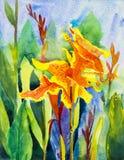 De schilderijen originele kleurrijk van het waterverflandschap van Canna-Lelie stock illustratie