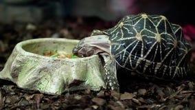De schildpad eet