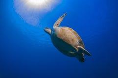 De schildpad houdt van klappend royalty-vrije stock afbeeldingen