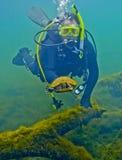 De schildpad ontsnapt aan Duiker - de Lentes Morrison stock fotografie
