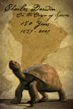 De Schildpad van de Galapagos (met het Knippen van Weg) Stock Afbeeldingen