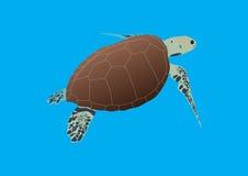 De Schildpad van Hawksbill vector illustratie