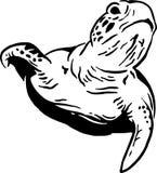 De schildpad van het water Royalty-vrije Stock Foto's