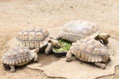 De schildpadden eten royalty-vrije stock fotografie