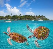 De schildpadden photomount Riviera Maya van het Akumalstrand Royalty-vrije Stock Afbeelding