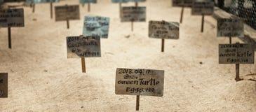 De schildpadeieren in het zand worden begraven dat Stock Fotografie