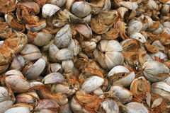 De Schillen van de kokosnoot Stock Foto
