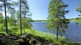 De schitterende mening van het aardlandschap van meer met groene lange bomen op blauwe hemelachtergrond Zweden, Europa stock video