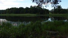 De schitterende mening van het aardlandschap op zonnige de zomerdag Groene bomen en installaties rond meer op blauwe hemelachterg stock videobeelden